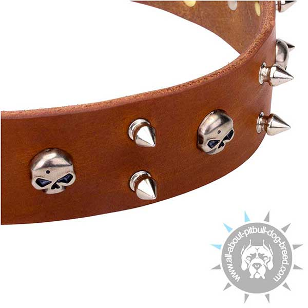 Unique Leather Collar with Nickel Plated Decor