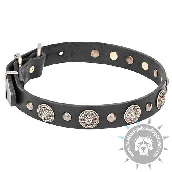 Decorative Leather Collar with Fancy Studs and Circles