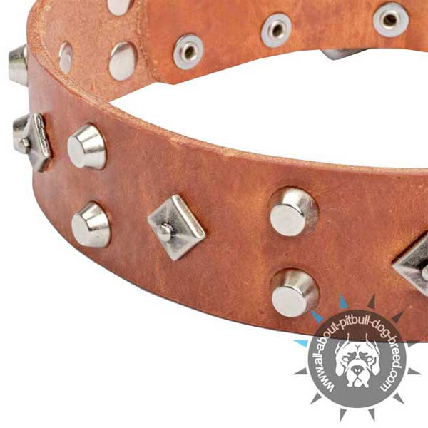 Handmade Tan Leather Pitbull Collar with Nickel-plated Fittings