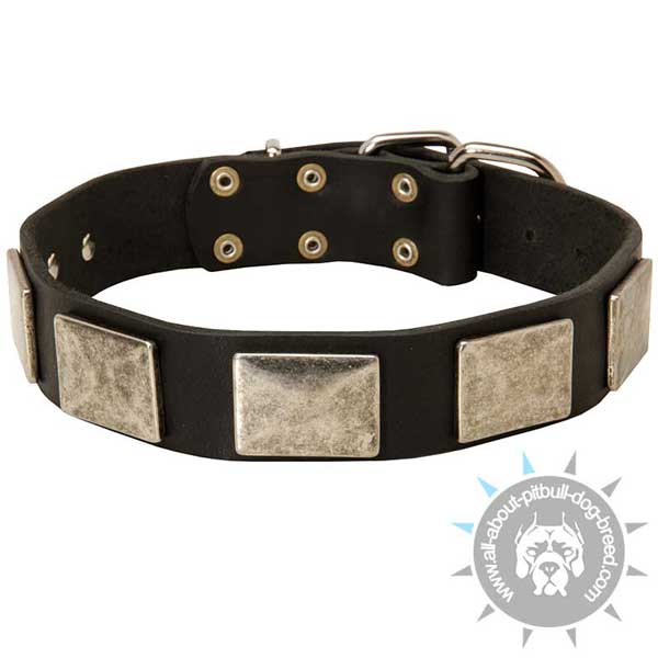 Riveted Leather Pitbull Collar for Daily Walking