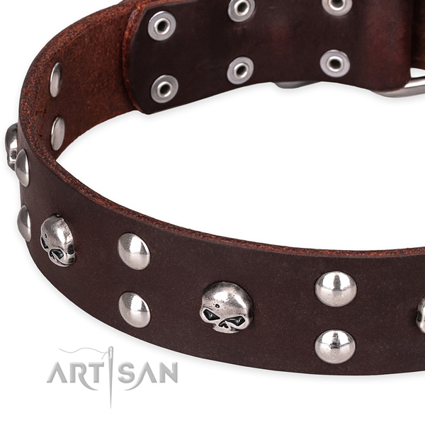 Casual leather dog collar with elegant embellishments