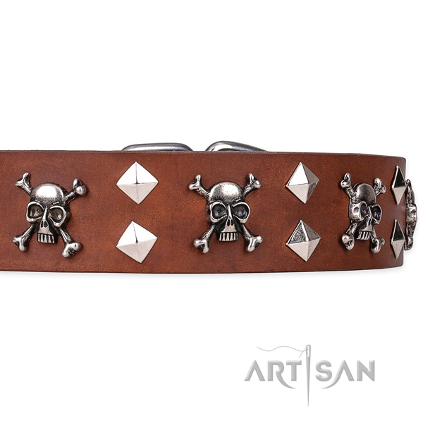 Casual leather dog collar with extraordinary studs