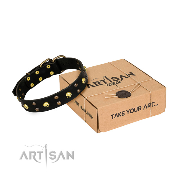 Daily leather dog collar with exciting studs