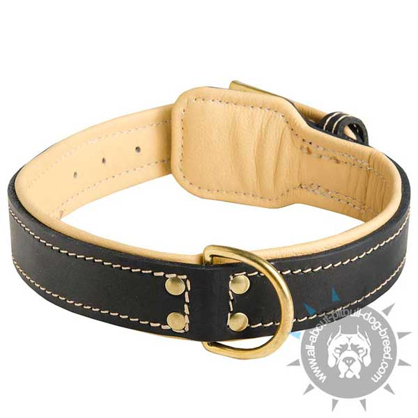 Special strong leather collar     with brass D-ring
