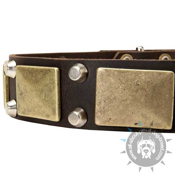 Reliable leather dog collar for everyday use