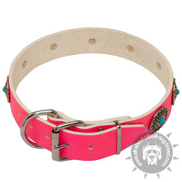 Fashion Pit Bull collar easily adjustable