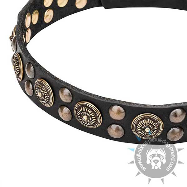 Goldish Brass Studs and Circles on Wide Dog Collar