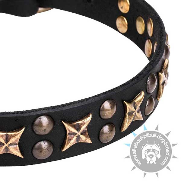 Bronze Plated Stars and Studs on Quality Leather Collar