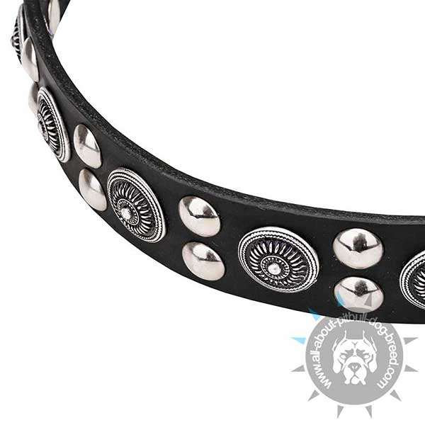 Shiny Chrome Plated Studs and Circles on Wide Dog Collar