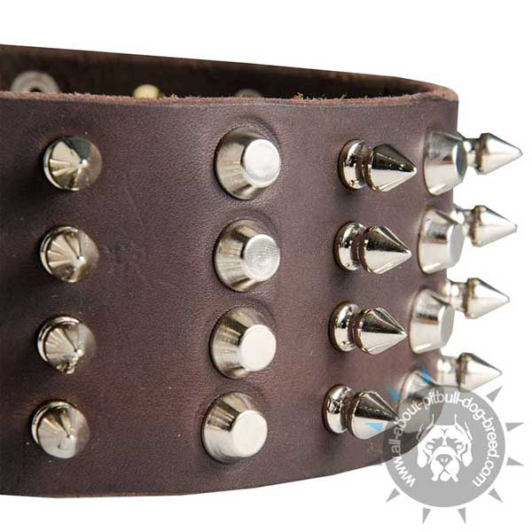 Pitbull Leather Collar with Shiny Spikes and Studs