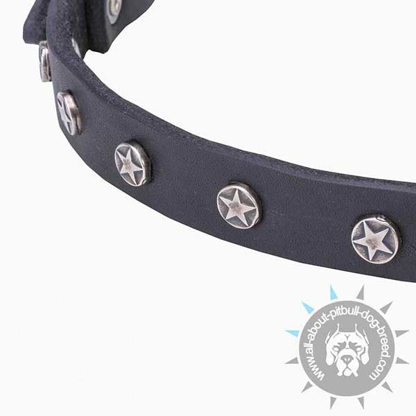 Leather Pitbull Collar with Star-like Studs