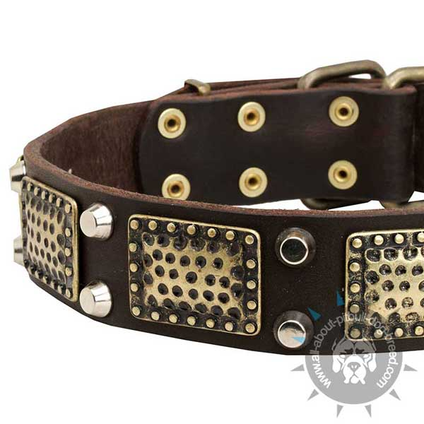 Functional Leather Pitbull Collar