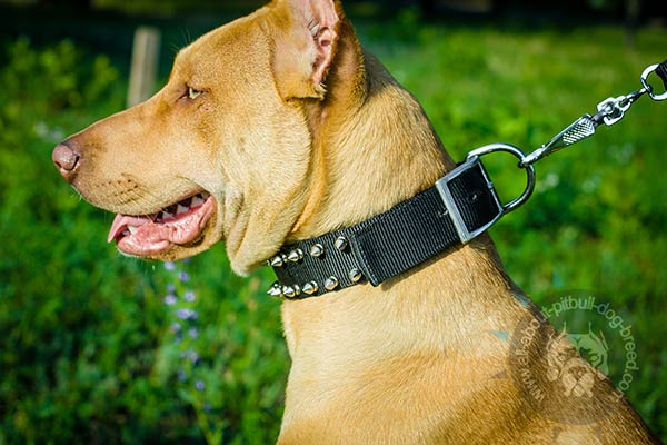 Nylon Pitbull collar with strong fittings
