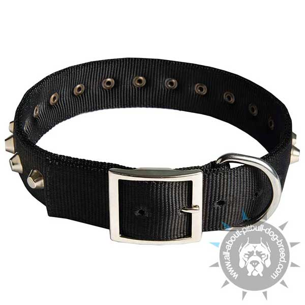 Reliable nylon dog collar with buckle and D-ring