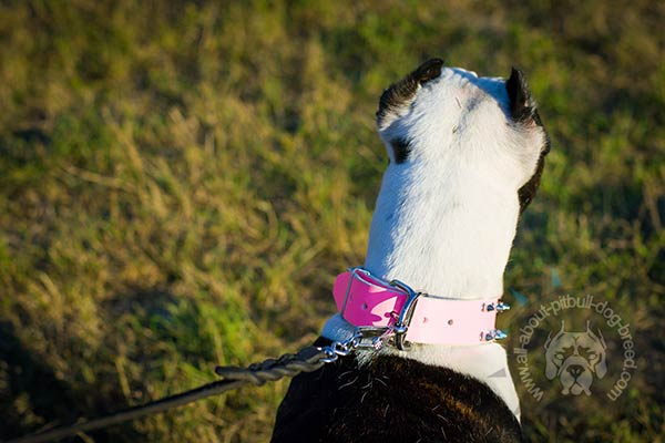 Pink leather Pitbull collar with strong buckle