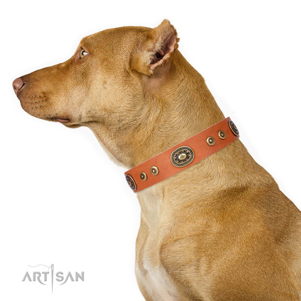 Fashionable embellished natural leather dog collar for everyday use