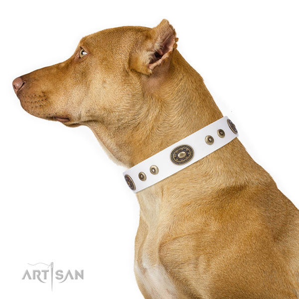 Incredible embellished genuine leather dog collar for basic training