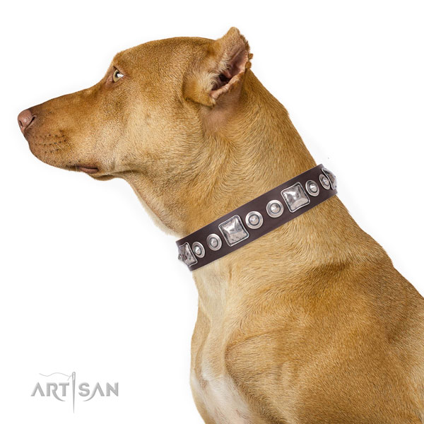 Stylish decorated leather dog collar for everyday use