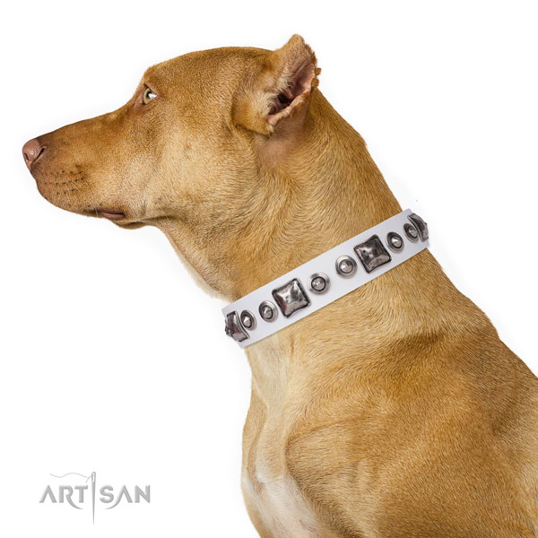 Amazing studded genuine leather dog collar for stylish walking