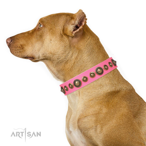 Corrosion proof buckle and D-ring on full grain leather dog collar for walking in style