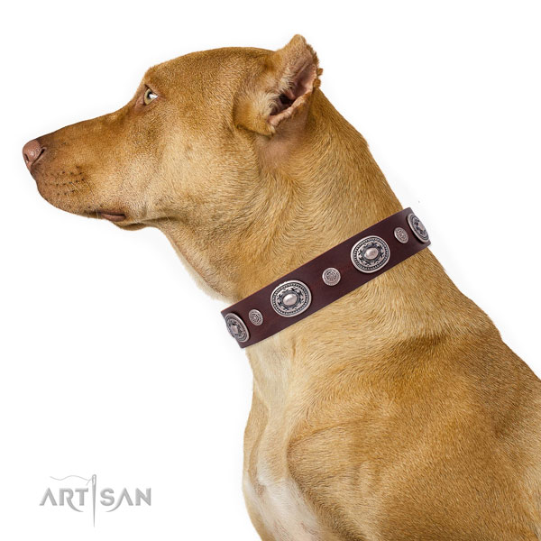 Rust resistant buckle and D-ring on full grain leather dog collar for daily walking