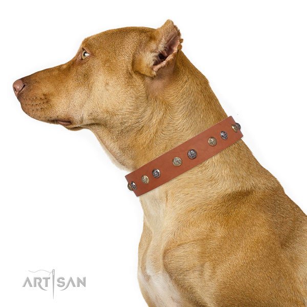 Leather dog collar with strong buckle and D-ring for easy wearing