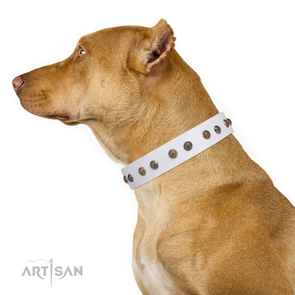 Comfy wearing decorated dog collar made of top notch natural leather
