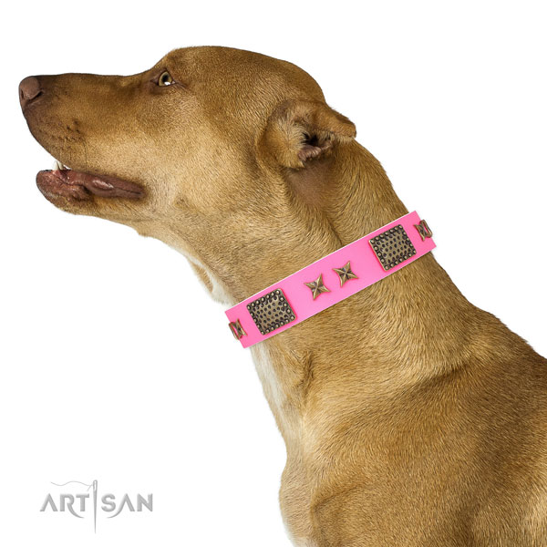 Fashionable studs on everyday use full grain natural leather dog collar