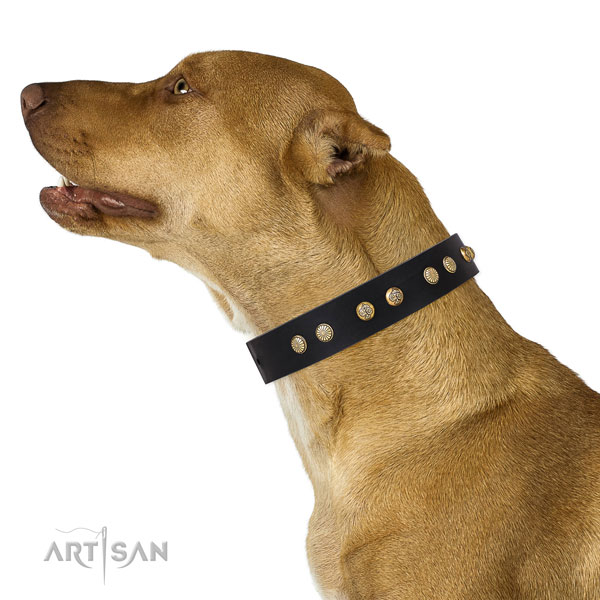 Awesome embellishments on daily walking natural genuine leather dog collar