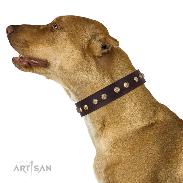 Top notch decorations on daily use leather dog collar