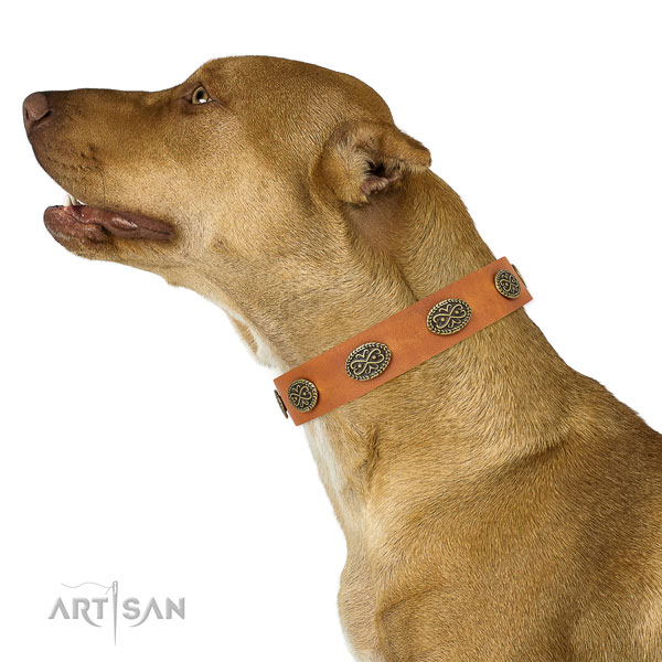 Awesome embellishments on comfy wearing full grain genuine leather dog collar
