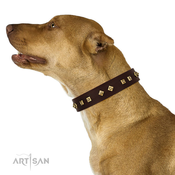 Awesome studs on everyday walking genuine leather dog collar