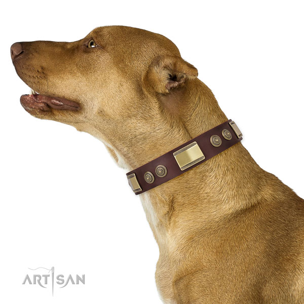 Incredible embellishments on everyday walking dog collar