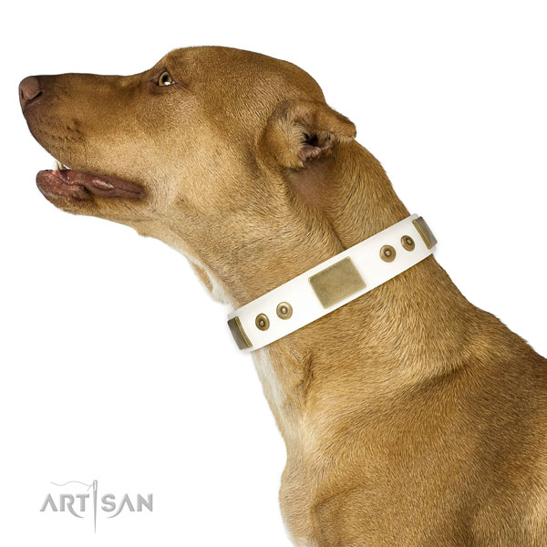 Reliable stylish walking dog collar of natural leather