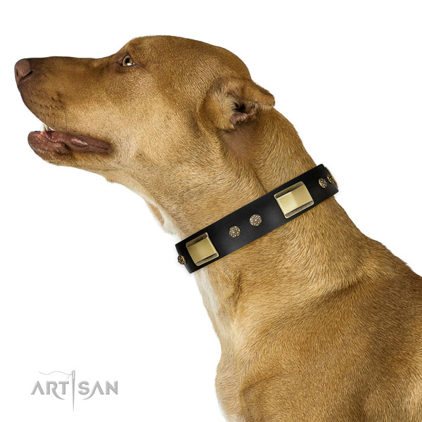 Everyday walking dog collar of natural leather with inimitable decorations