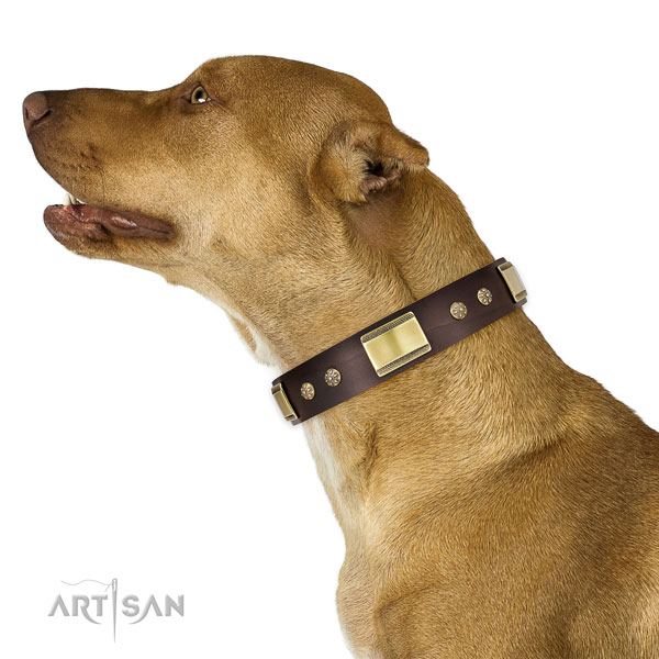 Easy wearing dog collar of natural leather with significant studs