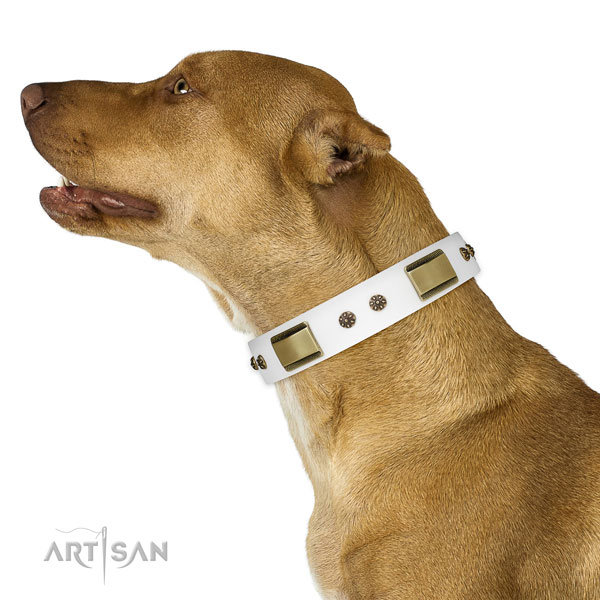 Easy wearing dog collar of natural leather with designer embellishments