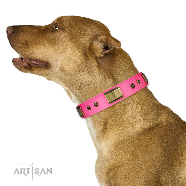 Daily use dog collar of genuine leather with top notch decorations