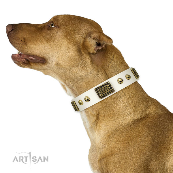 Corrosion proof buckle on full grain natural leather dog collar for stylish walking
