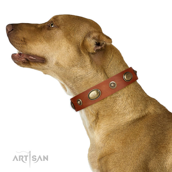 Handy use dog collar of leather with exceptional decorations