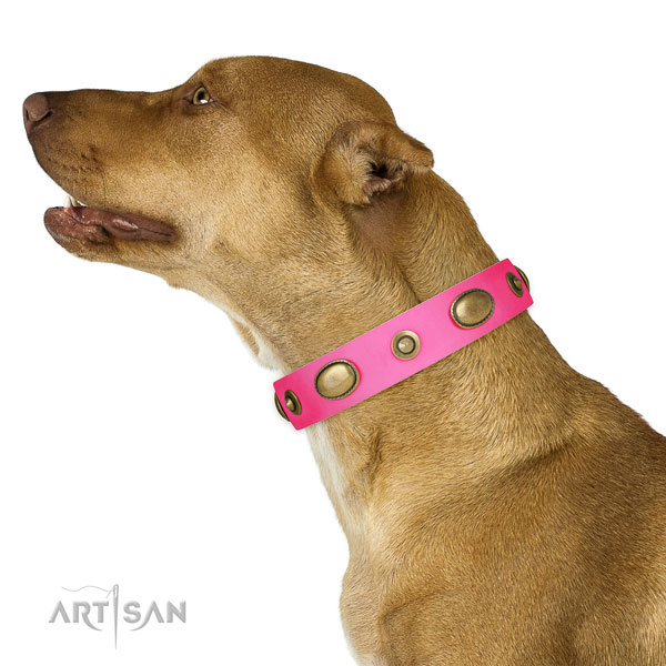 Handy use dog collar of natural leather with trendy decorations