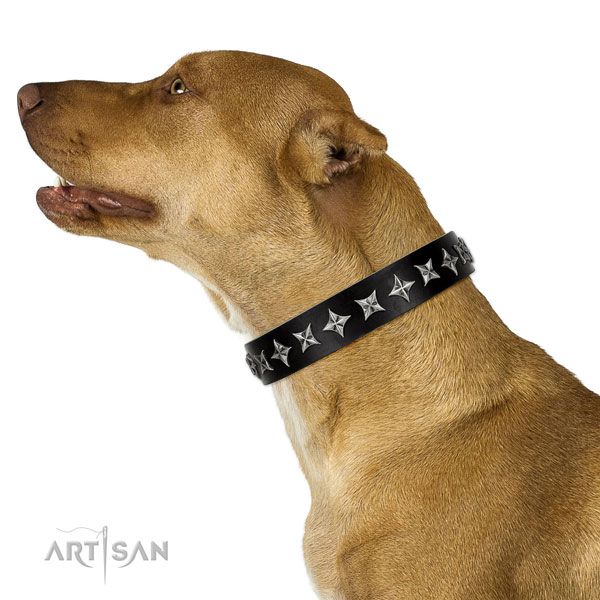 Comfy wearing embellished dog collar of strong leather