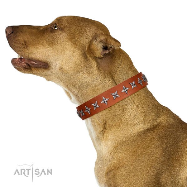 Quality full grain natural leather dog collar with awesome decorations