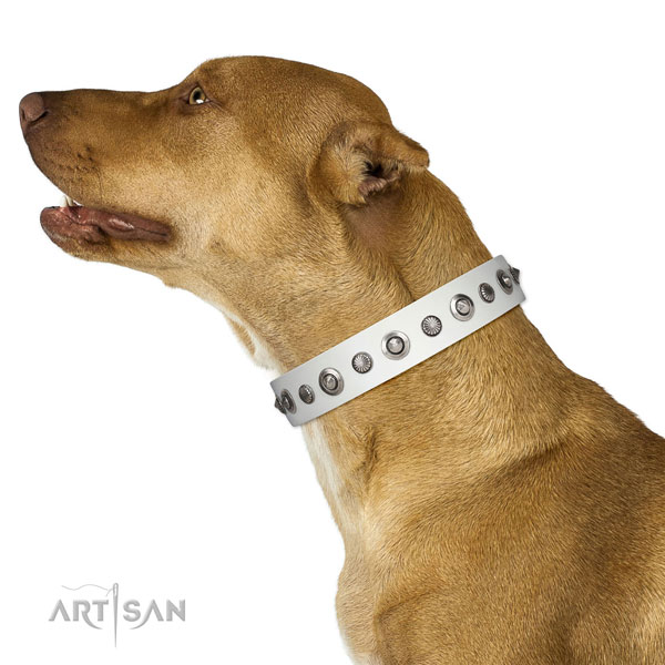 Full grain natural leather collar with rust-proof hardware for your impressive doggie