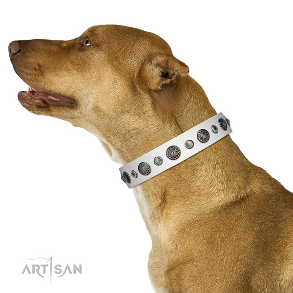 Handcrafted full grain leather dog collar with corrosion proof hardware