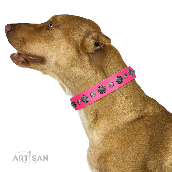 Adorned full grain leather dog collar with rust-proof fittings