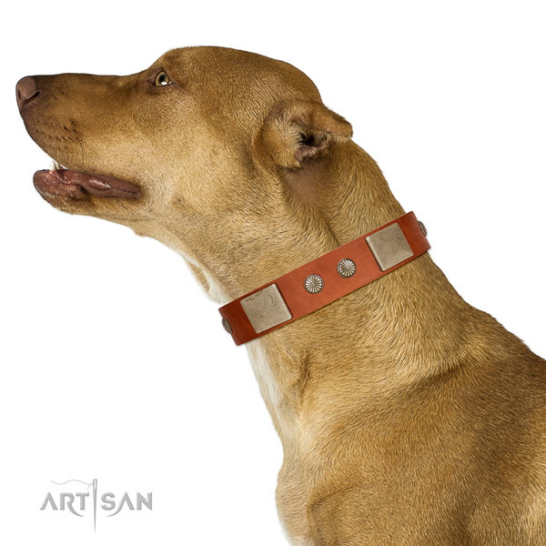 Significant full grain leather collar for your impressive dog