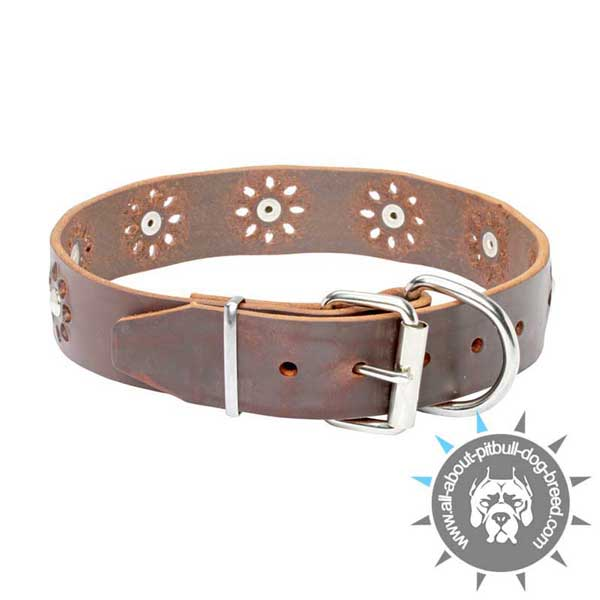 Adorned Leather Pitbull Collar with Reliable Hardware