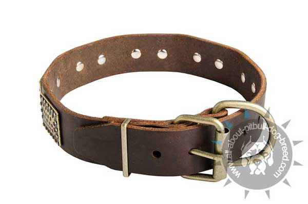 Leather Pitbull Collar with Reliable Brass Fittings