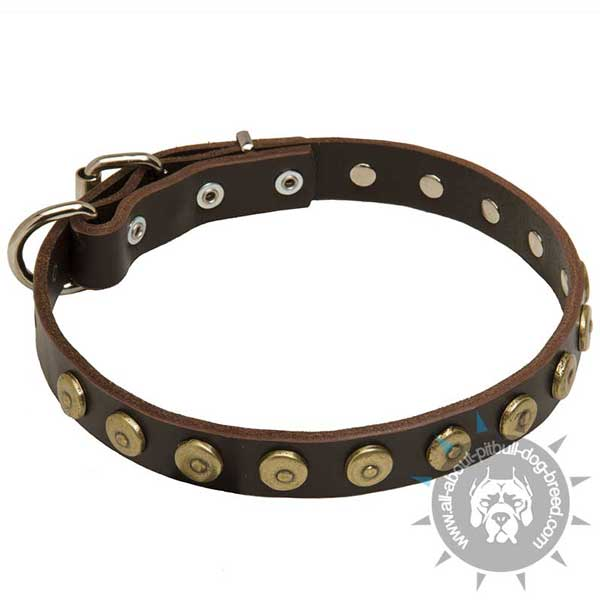 Buckled Leather Pitbull Collar Equipped with Ring for Leash
